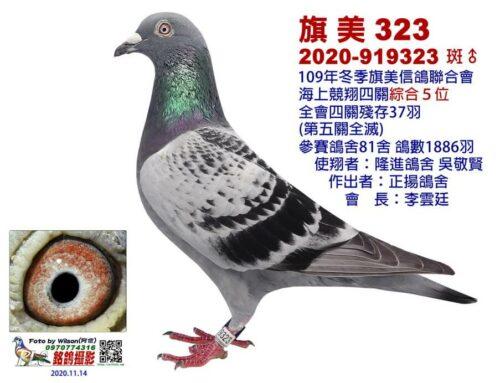 2020年冬季旗美信鴿南海競翔四關入賞鴿欣賞(五關全滅)