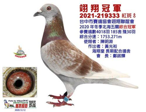 2020年台中翊翔冬季北海入賞鴿欣賞